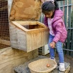 Jenny's ELC Epsom girl collecting eggs